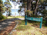 palm beach thumbnail