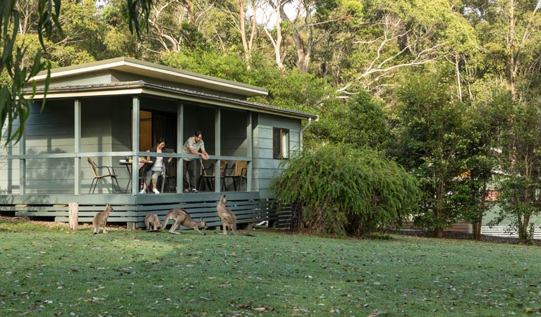 Cabin And Kangaroos